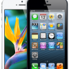 Apple's iPhone 5 Increased Demand Increases in Air Freight Bills
